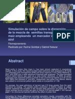 Simulación de campo sobre la dispersión de la mezcla de  semillas transgénicas de  maíz empleando  un marcador de grano azul