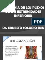 Anatomia de Los Plexos de Las Extremidades Inferiores (2)