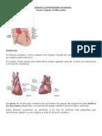 Word, Circulación y enfermedad coronaria.doc