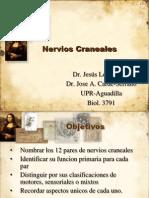 Nerv Ios Crane a Les Rev