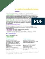 Morfología y estructuras bacterianas