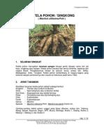 Karakteristik Ketela Pohon (Kantor Deputi Menegristek Bidang Pendayagunaan dan Pemasyarakatan Ilmu Pengetahuan dan Teknologi)