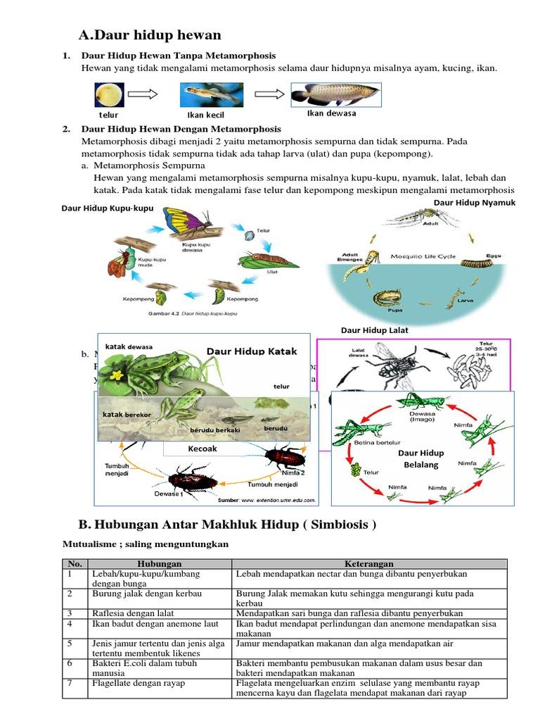 930 Gambar Daur Hidup Hewan Ikan Terbaru
