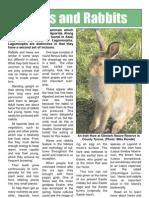 Hares and rabbits factsheet