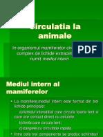 Circulatia La Animale