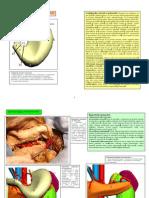 Lp 19 Stomacul Splina (1)