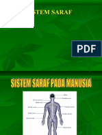 13. Sistem Saraf- Indera Ok