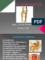 Clase Genitales
