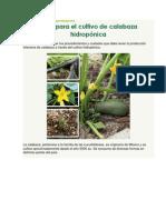 Guía para el cultivo de calabaza hidropónica