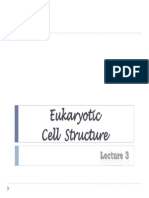 2013 Lecture 3 - Cell Organization - II
