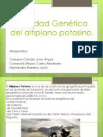Diversidad Genetica Del Altiplano Potosino