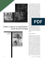 Miramontes, Orden y caos en la orgganización social de las hormigas