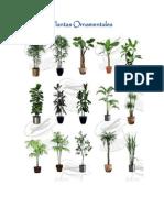 Plantas Ornamentales. Final