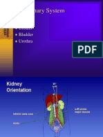 Urinary System 06
