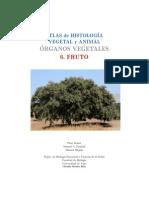 o-v-fruto.pdf