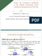 Apresentação Lab Meeting - Projeto IC Felipe.pptx