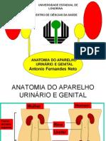Anatomia do Sistema Urinário e Genital_1