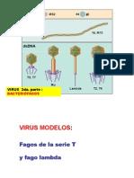 VIRUS 2012 2da Parte