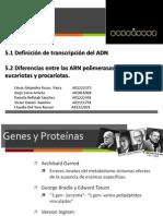 Transcripci_n POL ARN Eucariotas y Procariotas MI FINAL
