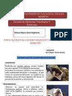 Patologias Del AP. Dig. en Animales
