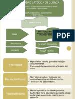 patologiaclinicadelaparatoreproductordeanimales-121121104532-phpapp01