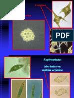 Algas y Cyanobacterias -10 Parte 5