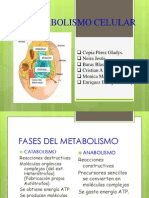 El Metabolismo Celular (2)