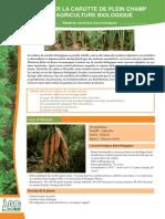 Culture de la carotte biologique en champs