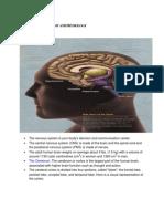 Anatomy and Physiology of CVA