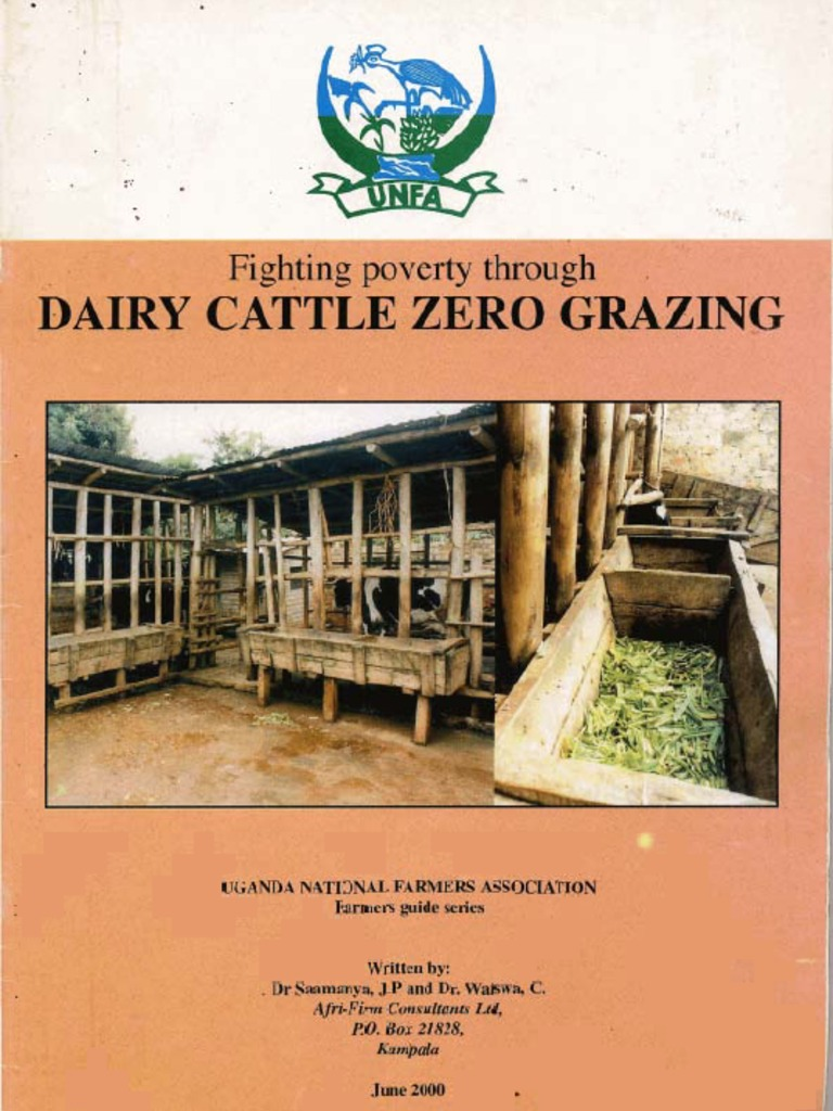 Dairy cattle zero grazing calf dairy cattle