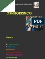 ORNITORRINCO -CN martim 5ºb final