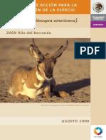 Berrendo (Antilocapra americano) Preograma de acción para la xonsevación de la especie.