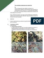 Practica Control Mecanico de Insectos .. Con Fotos (2)