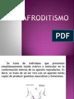 Hermafroditismo 05
