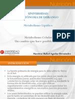 MetabolismoCelularEnzimas.pdf