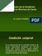 Condicion Corporal