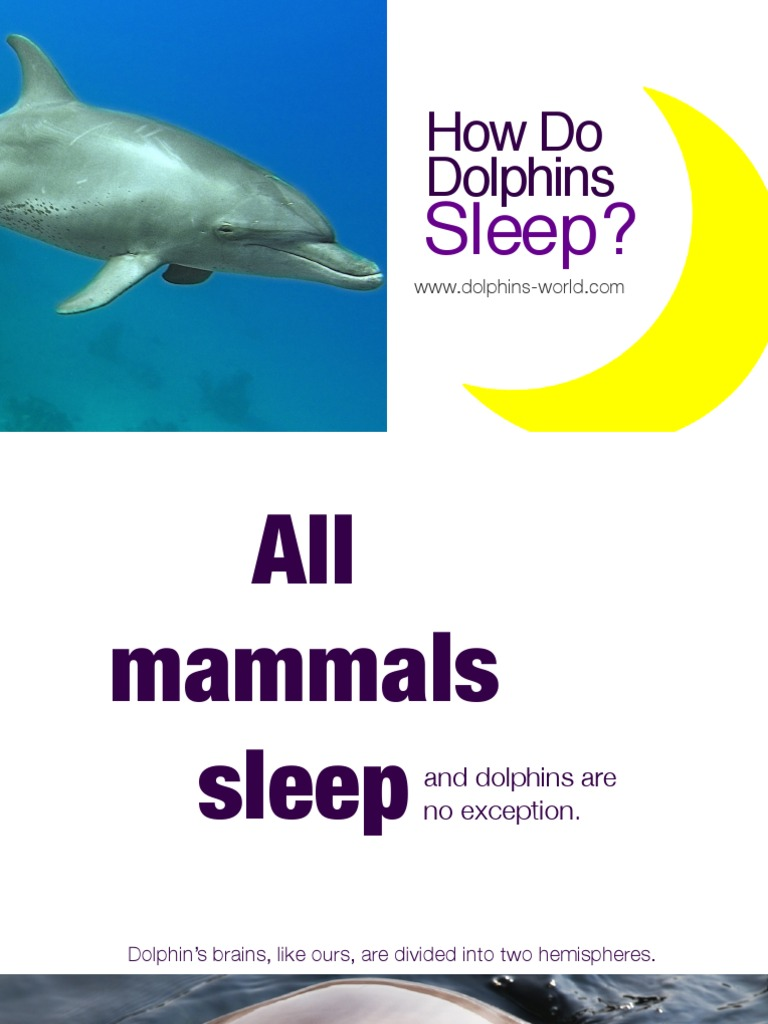 How do dolphins sleep