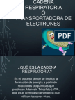 ! 1MM1_Cadena Respiratoria