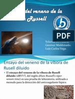 Tiempo Del Veneno de La Vibora de Russell