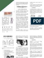 TRISOMÍA PARCIAL DE 8p (1)