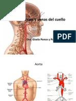 Arterias y Venas Del Cuello (1)