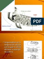 metabolismo  y ATP final.ppt