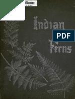 Album of Indian Ferns