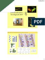 Tecnicas moleculares I 2013.pdf