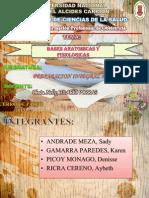 Bases Anatomicas y Psicologicas