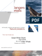 Dolphin Dangers and Threats