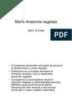 morfo-anatomie