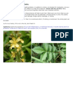 Foyaging - Edible Wild Grasses, Plants and Herbs - Unknown