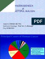 Cancerogeneza_fenotip cu2