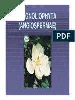 Divisi Magnoliophyta